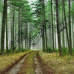 trees with music notes